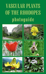 Vascular Plants of the Rhodopes - photoguide